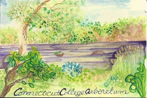 Connecticut College Arboretum, Gretchen van der Lyke,Watercolor On Rag Mat, Postcard #6, $TBD