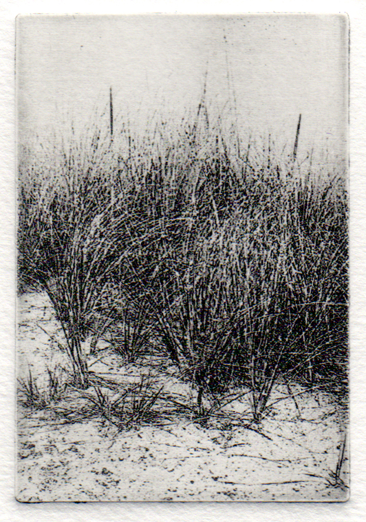 Beach Grasses, Carol Dunn, Photo Polymer Etching, 7x8, $125