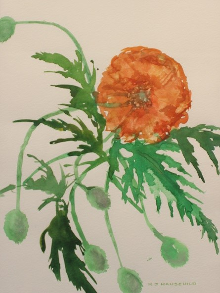 Popping Poppy, Robert J. Hauschild, Watercolor, Watercolor, 12x15, $195